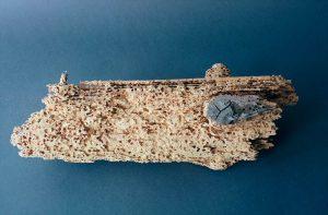 Les grosses vrillettes creusent de multiples galeries assez importantes, et détruisent les éléments de bois attaqués.