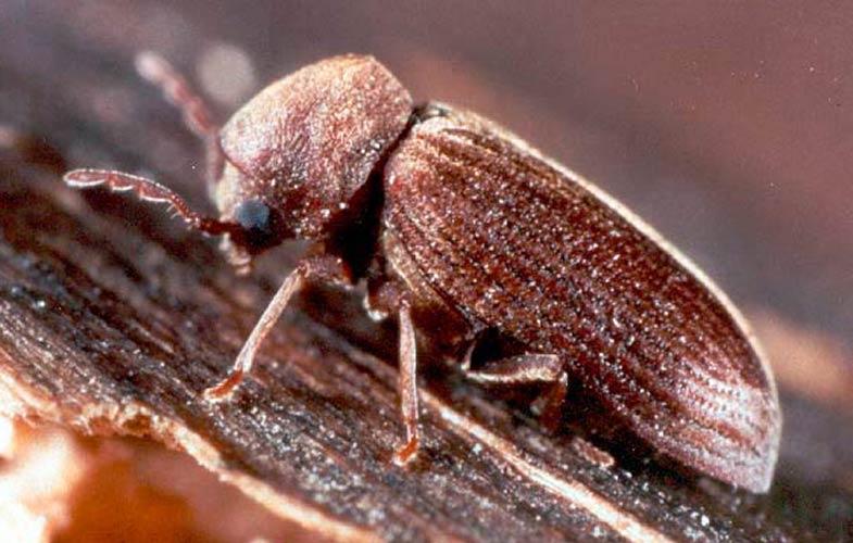 insecte bois maison bruit ventana blog. Black Bedroom Furniture Sets. Home Design Ideas