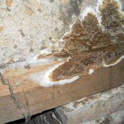 Traitement des mérules / Champignons lignivores
